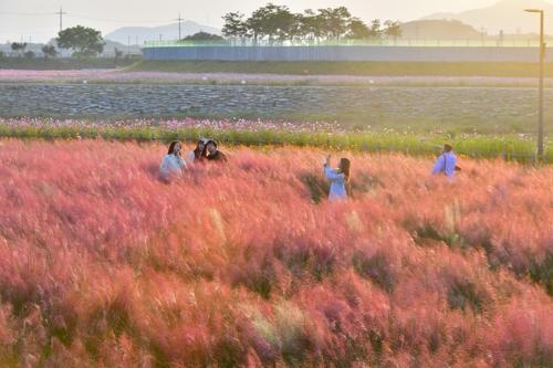 가을정취 짙어가는 장성 황룡강서 토요일 달빛 치맥파티
