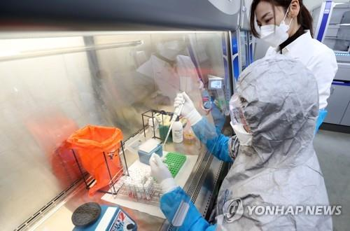 A researcher checks collected samples for COVID-19 tests at a laboratory in Incheon, west of Seoul, on Jan. 14, 2021. (Yonhap)