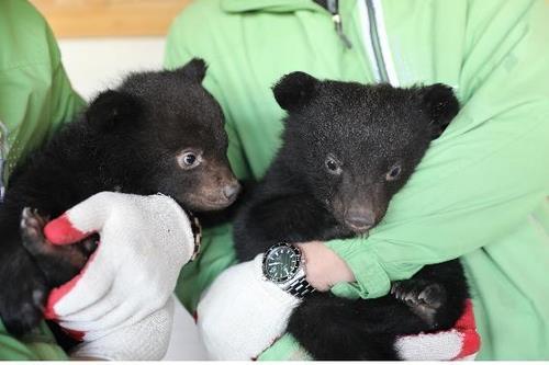 새끼 반달곰 달봄(왼쪽)이와 만월(오른쪽)