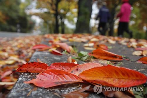 낙엽 쌓인 우암산 산책로