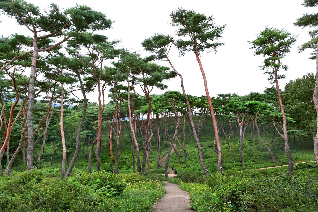 향토숲 [사진/조보희 기자]