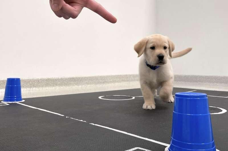 실험에 참여한 강아지. [미국 애리조나대 제공. 재판매 및 DB금지]