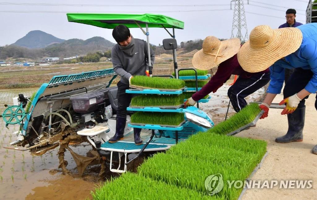 모내기하는 농부들