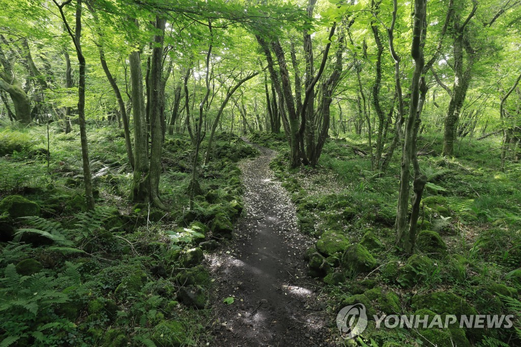 This photo taken June 5, 2020, shows Gotjawal Forest, a naturally formed forest located on the middle slopes of Mount Halla, Jeju Island. (Yonhap)