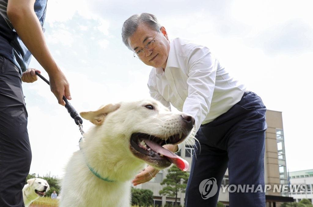 President Moon Jae-in pats a puppy, one of six that his dog Gomi gave birth to last year, in the Nokjiwon Garden at the presidential office in Seoul on Aug. 30, 2019, in this photo provided by the office. The puppies were distributed to four local governments later in the day. Gomi is one of two Pungsan-breed dogs gifted to Moon by North Korean leader Kim Jong-un during their talks in the North Korean capital, Pyongyang, in 2018. (PHOTO NOT FOR SALE) (Yonhap)