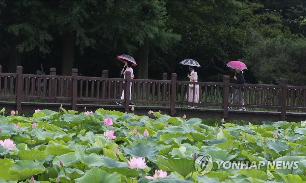 연꽃 따라 걷기