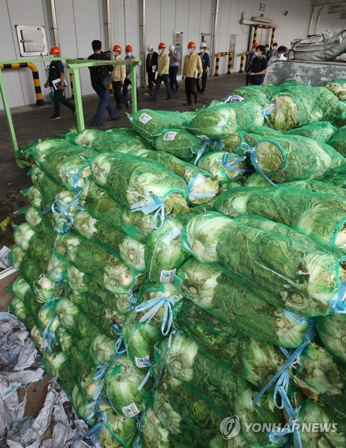 Releasing stockpiled cabbages to stabilize market