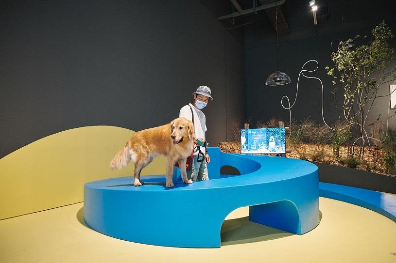 "This photo provided by MMCA on Sept 21, 2020, shows an installation art piece featured at a special canine-themed exhibition titled ""A Museum For All, A Museum For Dogs"" at the museum's gallery in Seoul. (PHOTO NOT FOR SALE) (Yonhap)"