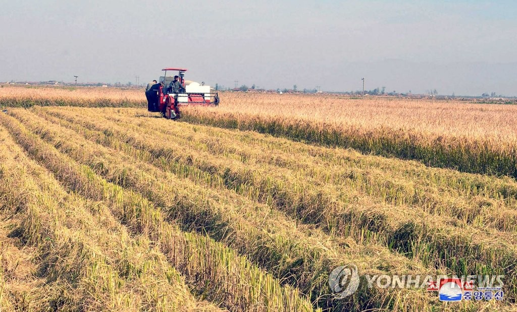 Autumn rice farming in N. Korea